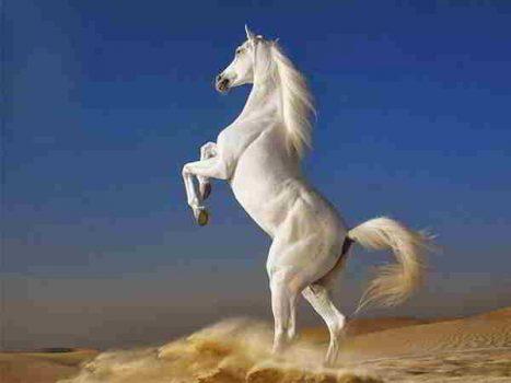 Nằm mơ thấy con ngựa đánh số nào dễ trúng?