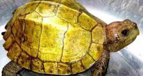 Ngủ mơ thấy rùa đánh con gì dễ trúng?