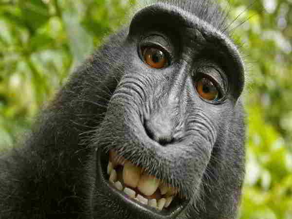 Ngủ mơ thấy con khỉ nên đánh số nào?
