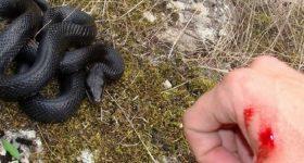 Mơ thấy bị rắn cắn là điềm báo gì, đánh con số nào may mắn?
