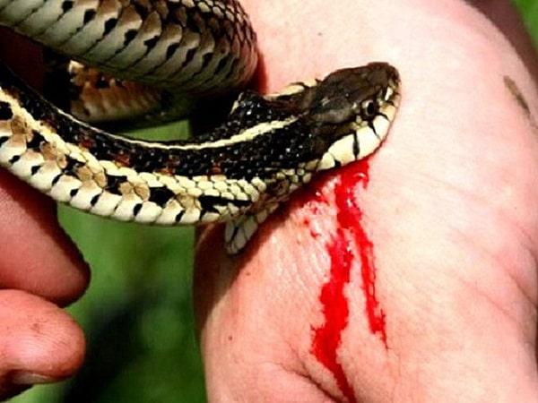 Điềm báo trong giấc mơ thấy bị rắn cắn