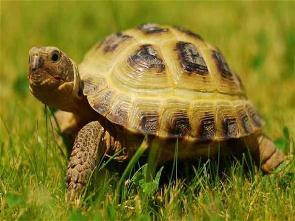 Mơ thấy rùa là điềm báo gì, đánh con số nào may mắn?