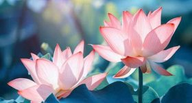 Mơ thấy hoa sen là điềm báo gì – Đánh lô đề con số nào?