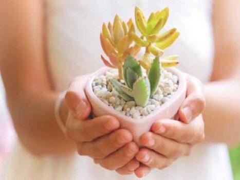 Ý nghĩa của cây sen đá phong thủy mang đến tài lộc cho gia chủ