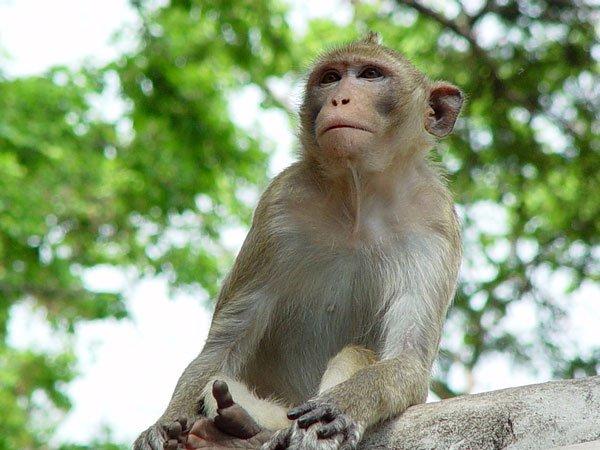 Mơ thấy khỉ là điềm báo gì? Mơ thấy khỉ đánh đề bao nhiêu