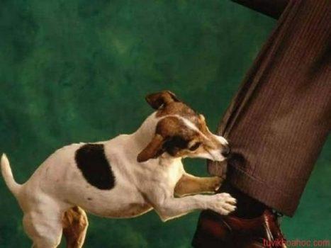 Mơ thấy chó cắn đánh con gì? Nằm mơ thấy chó cắn là điềm báo gì?