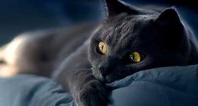 Mơ thấy mèo đen là điềm hung hay cát, đánh con đề nào?