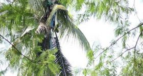 Con số may mắn khi mơ thấy cây dừa