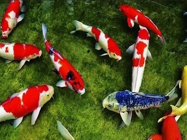 Giải mã ý nghĩa giấc mơ thấy cá mang điềm báo gì?