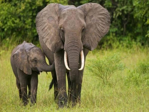 Mơ thấy con voi mang đến điềm báo gì? Đánh lô đề con số nào