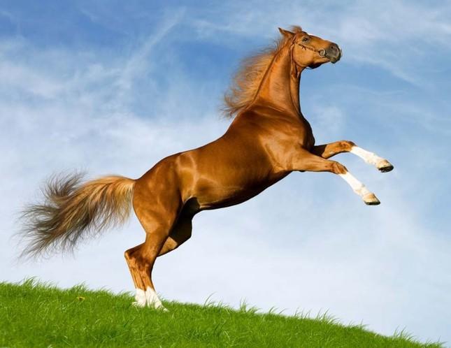 Chiêm bao thấy con ngựa có điềm báo gì đặc biệt?