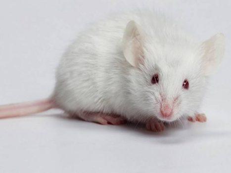Giải mã ý nghĩa giấc mơ thấy con chuột mang điềm báo gì?