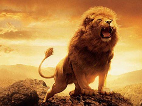 Mơ thấy sư tử có ý nghĩa điềm báo và con số lô đề may mắn gì