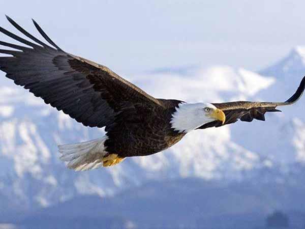 Mơ thấy chim đại bàng đánh xổ số con gì ăn chắc