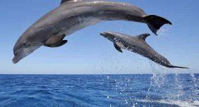 Mơ thấy cá heo là điềm báo điều gì? Đánh số nào may mắn?