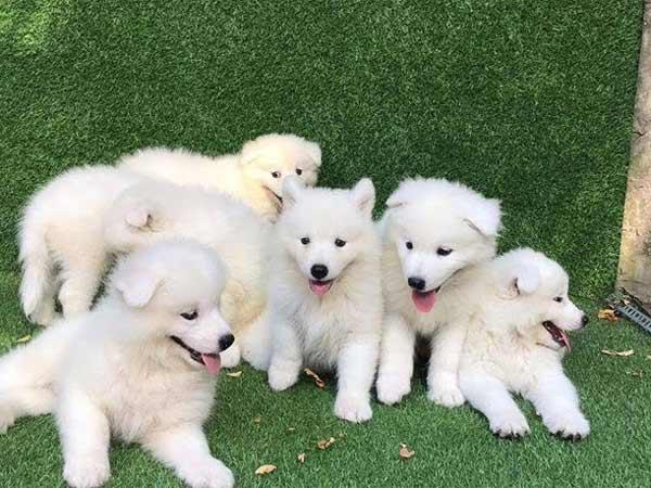 Nằm mơ thấy đàn chó có ý nghĩa gì đặc biệt