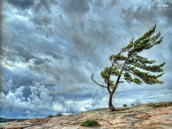 Mơ thấy gió đánh con gì may mắn, là điềm tốt hay xấu?