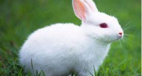 Ngủ mơ thấy con thỏ là điềm hung hay cát ? Đánh lô đề con gì ?