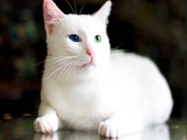 Ngủ mơ thấy mèo trắng là điềm lành hãy dữ ? Đánh lô đề con gì ?