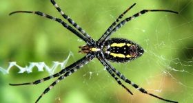 Giấc mơ thấy con nhện đánh nên chọn số mấy đánh con gì