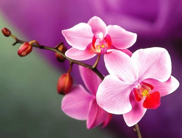 Nằm mơ thấy hoa lanlà điềm báo gì? nên đánh lô đề số mấy