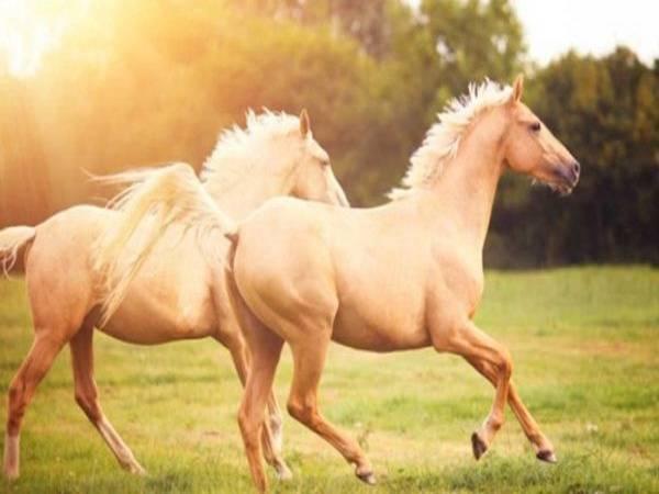 Nằm mơ thấy ngựa là điềm hên hay xui ? Đánh số mấy trúng ?