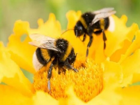 Nằm mơ thấy ong là điềm hên hay xui ? Đánh số mấy trúng ?