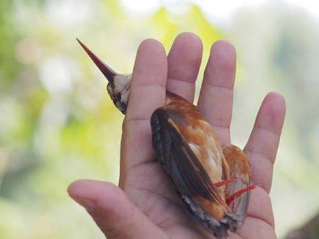 Nằm mơ thấy bắt chim đánh con gì ăn chắc, có ý nghĩa điềm báo gì