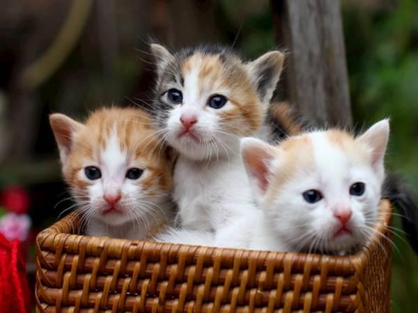 Nằm mơ thấy mèo đánh số mấy ? là điềm hên hay xui ?