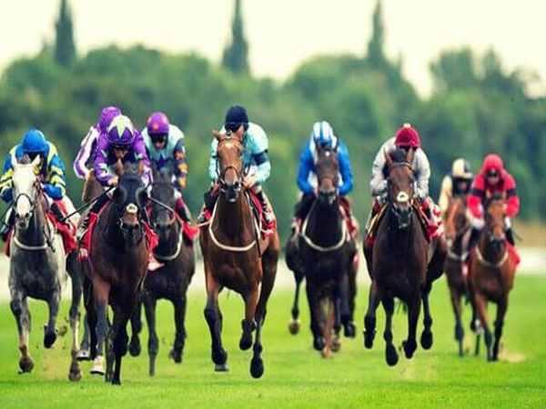 Game đua ngựa là gì? Hướng dẫn chơi game đua ngựa online
